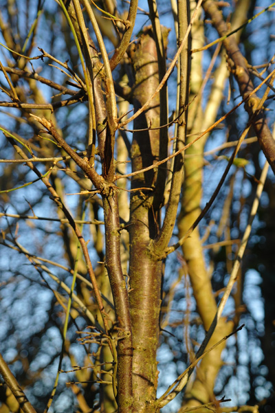 Bare branches in the sunshine