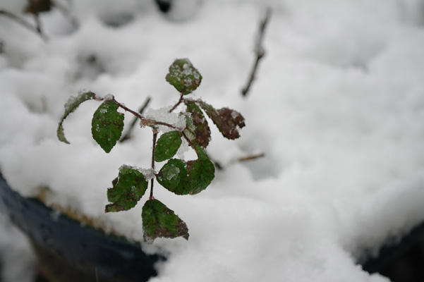 Little plant in the snow.