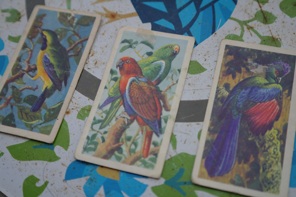 Little illustrated cards, tropical birds. Illustrations of a Orange-bellied Chloropsis, a Red-sided Parrot, and a Purple-crested Turaco.,