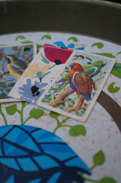 Illustrated Brooke Bond tea cards. Tropical bird series.