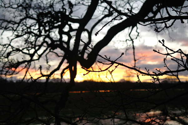 Silhouette of branches, in front of the sun set, Dorset, England.