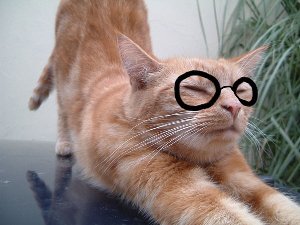 Cinnamon with glasses. Funny cat photo.
