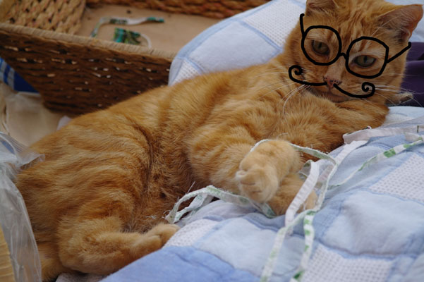 Cinnamon the cat, with drawn on glasses.