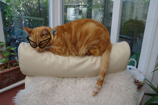 Cinnamon wearing glasses.