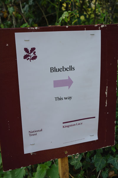 This way to the bluebells!