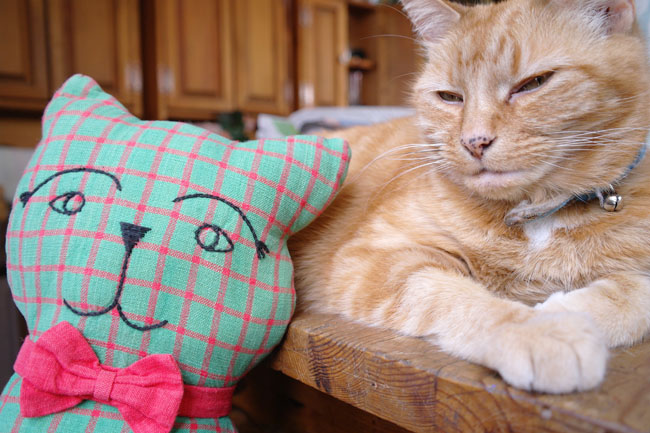 Maguire the toy cat and Cinnamon the real cat.