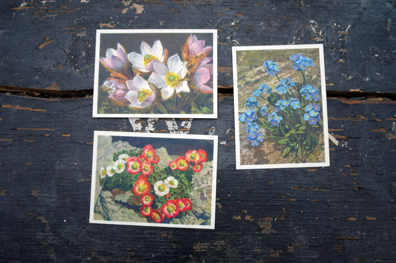 Vintage flower postcards.