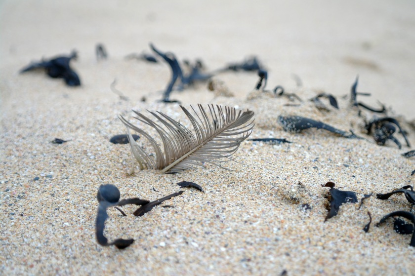 Feather sticking out of the sand. Winter beach walk. The coast in January.