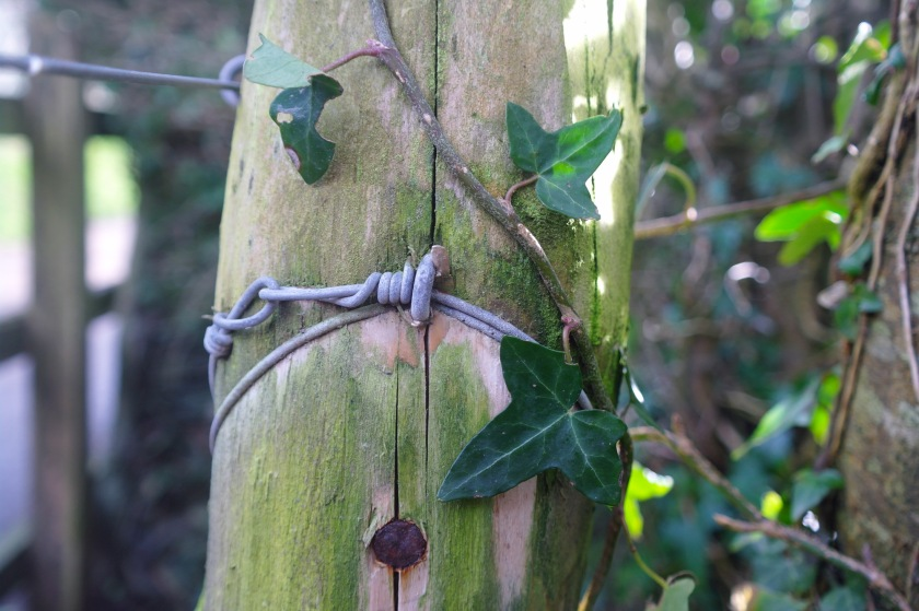 Ivy growing on a fence post. Sewing textile art inspiration.